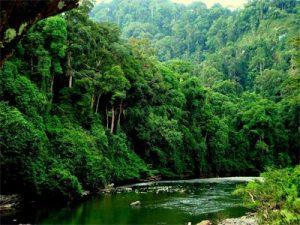 caracteristicas-bosques-tropicales