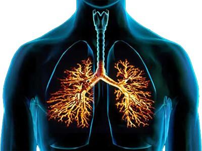 caracteristicas-bronquios