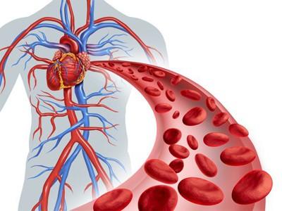 Características de los Vasos Sanguíneos -【Tipos de Vasos】