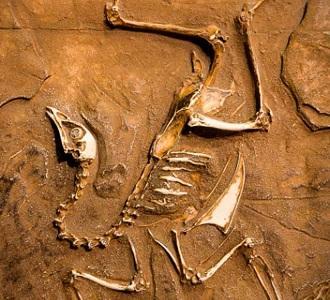 caracteristicas de los fosiles