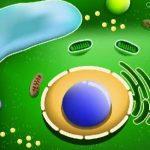 caracteristicas de las celulas vegetales
