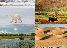 caracteristicas de los biomas