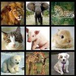 caracteristicas de los animales viviparos