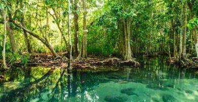 caracteristicas de los manglares