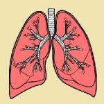 caracteristicas de los pulmones