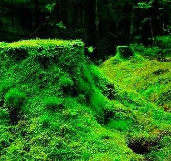 caracteristicas de las briofitas