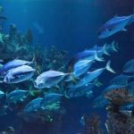 caracteristicas de los animales acuaticos