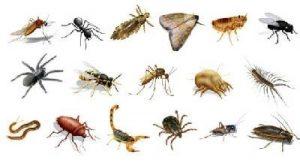 caracteristicas de los animales invertebrados