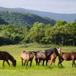 caracteristicas de los ecosistemas terrestres