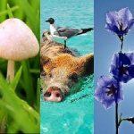 caracteristicas de los reinos de la naturaleza