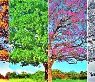 caracteristicas de las estaciones del año