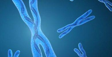 caracteristicas de los genes dominantes y recesivos