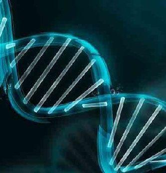 caracteristicas del fenotipo y genotipo