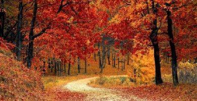 caracteristicas del otoño