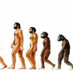 caracteristicas de la teoria de la evolucion