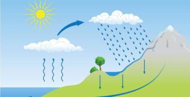 caracteristicas de los ciclos biogeoquímicos