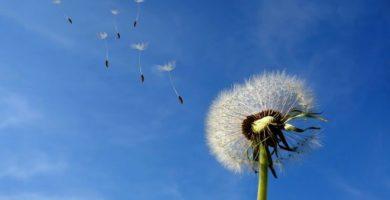 caracteristicas del aire